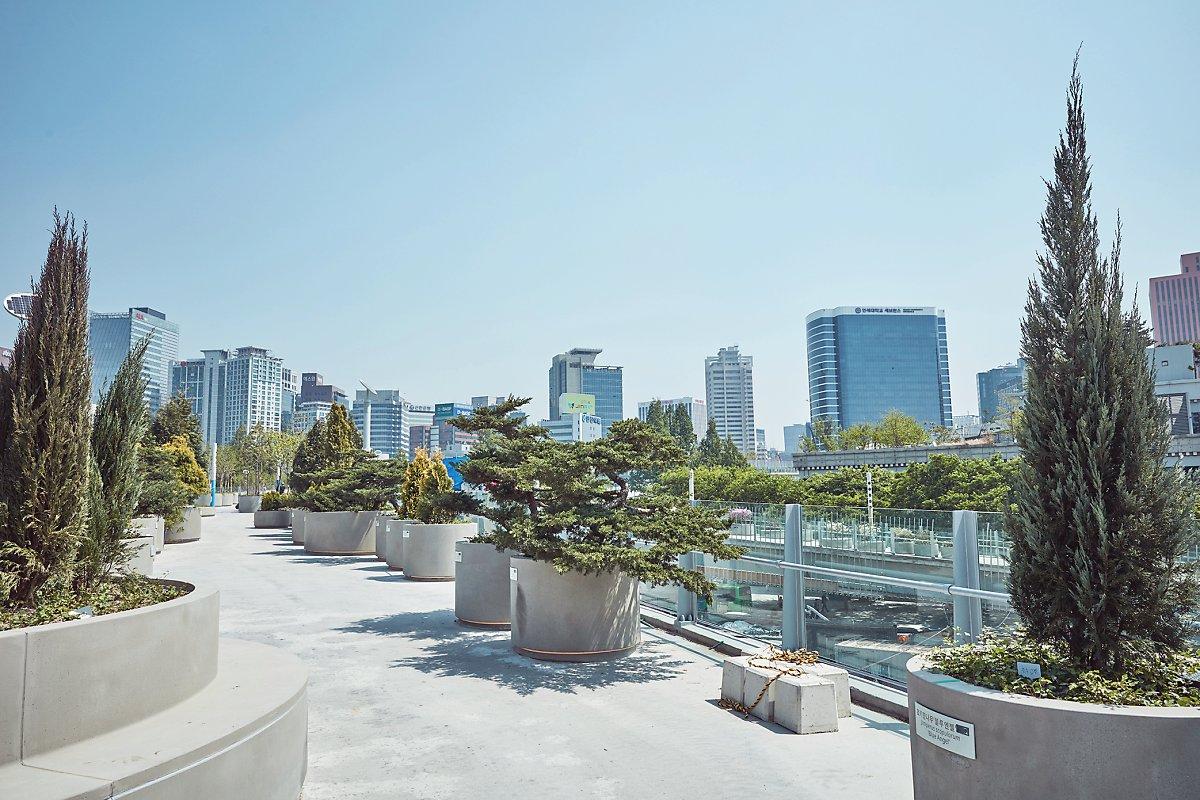 서울로에서 반려나무 입양하기! (서울로7017) : 네이버 블로그