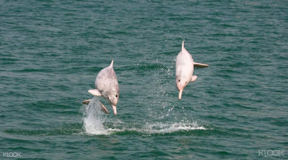 지금 만나러 갑니다, 홍콩 핑크 돌고래 투어