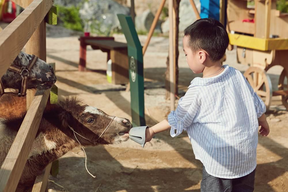 춘천힐링하기좋은가볼만한곳 알파카월드에서 무공해 동물체험을