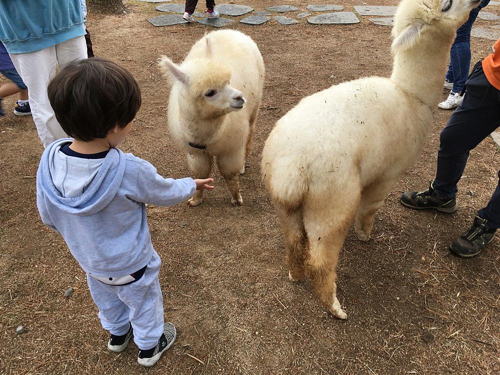 홍천체험학습가볼만한곳 알파카월드, 아이들의 동물천국