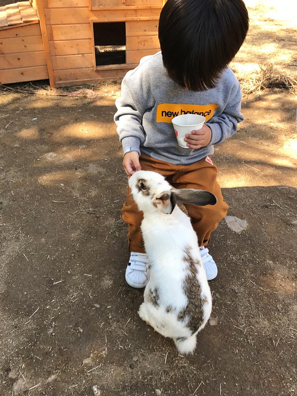 아이들과가볼만한곳 귀여운 알파카랑 놀아요!