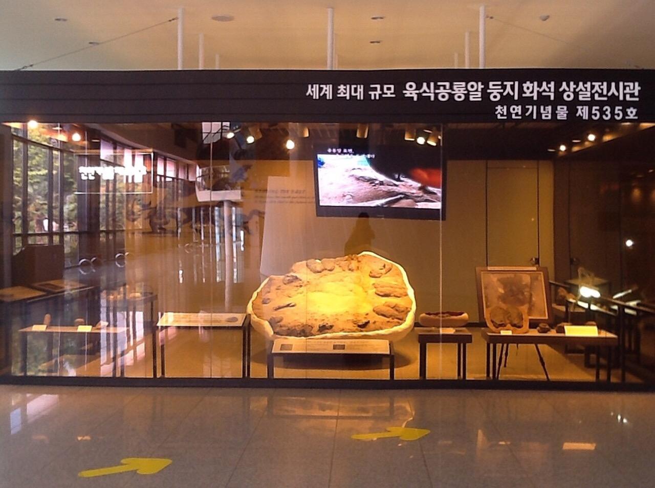 신안 압해도 수각류 공룡알 둥지 화석&먹거리