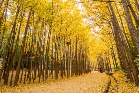 서울숲공원,10월 12일·13일 서울숲의 아름다움을 전시하는 다채로운 전시·공연·행사 개최